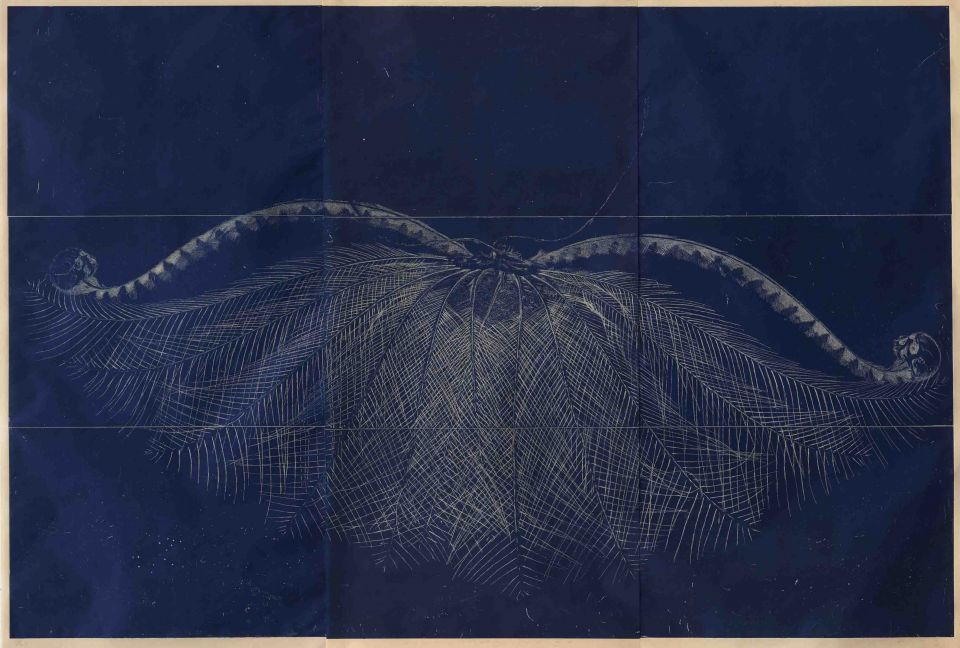 dawn survey indigo, relief etching